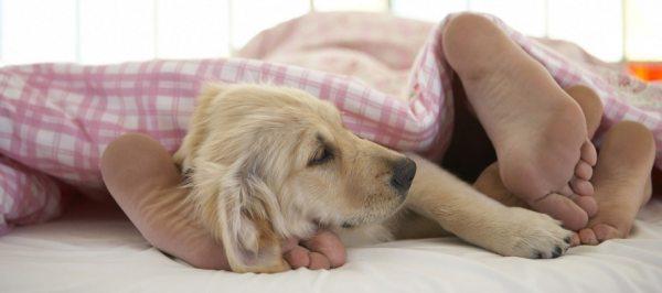 Ортопедичне підстава для ліжка — гарантія якості сну і довговічність матраца