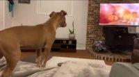 Реакція собаки на «Короля Лева» вразила соцмережі
