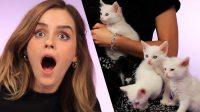 Кошенята Емми Уотсон вийшли з-під контролю під час інтерв'ю
